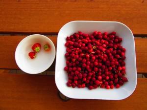 真っ赤な果実
